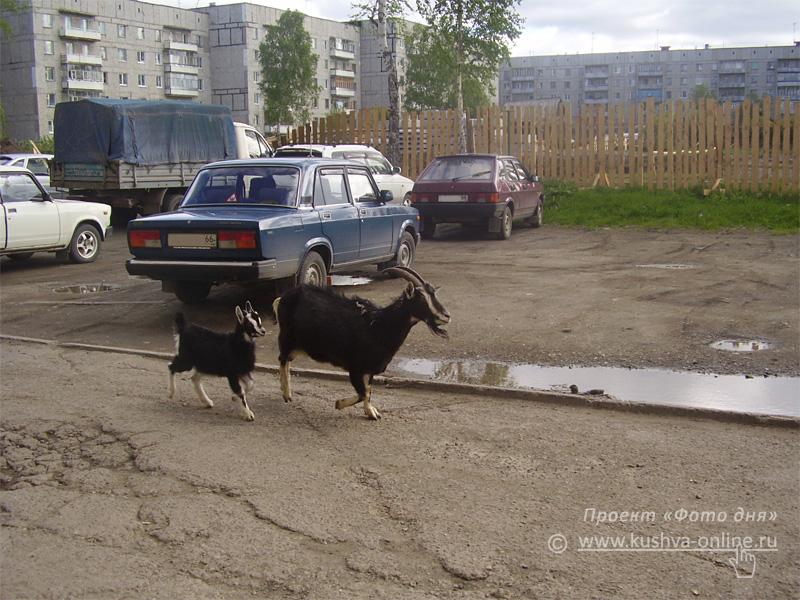 Фото дня от 27 августа 2008 г. г. Автор: Екатерина Мироевская