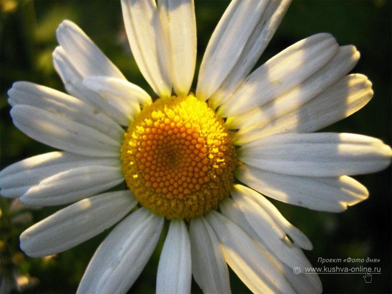 Фото дня от 13 октября 2008 г. г. Автор: Анонимный фотомастер