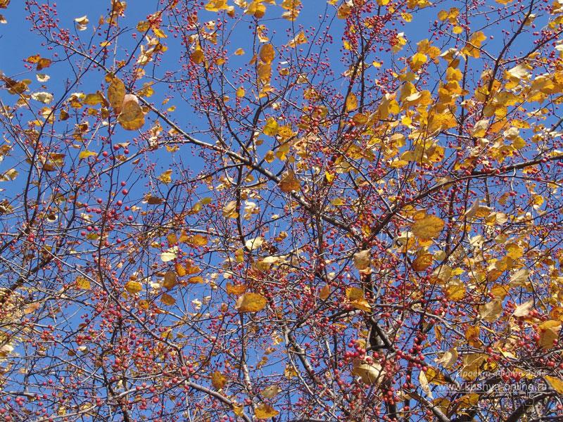 Фото дня от 14 октября 2008 г. г. Автор: Анонимный фотомастер