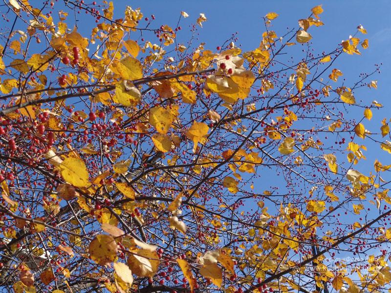 Фото дня от 27 октября 2008 г. г. Автор: Анонимный фотомастер