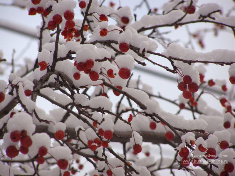 Фото дня от 2 декабря 2008 г. г. Автор: Луиза Садкова