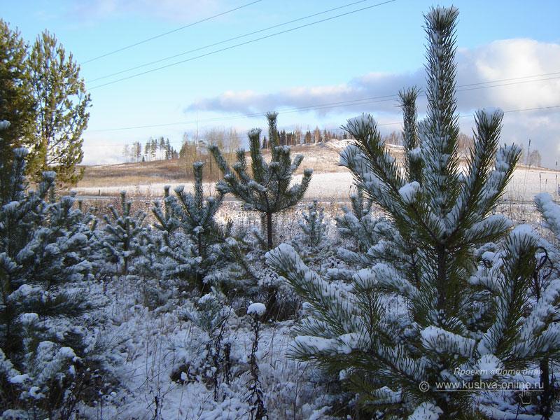 Фото дня от 5 декабря 2008 г. г. Автор: Александр Скрябин