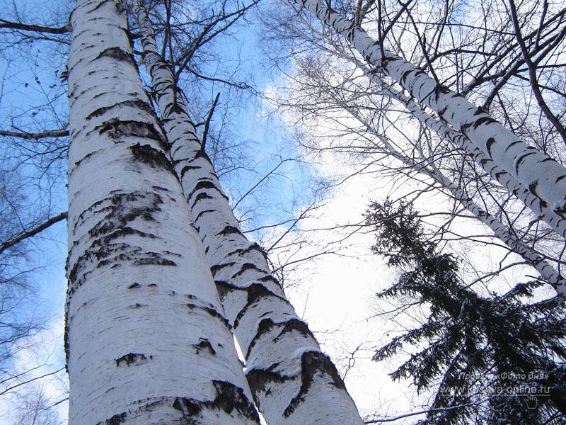 Фото дня от 8 декабря 2008 г. г. Автор: Анонимный фотомастер