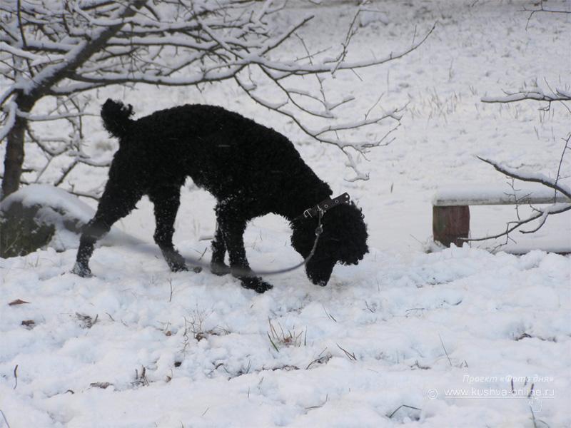 Фото дня от 12 декабря 2008 г. г. Автор: Луиза Садкова