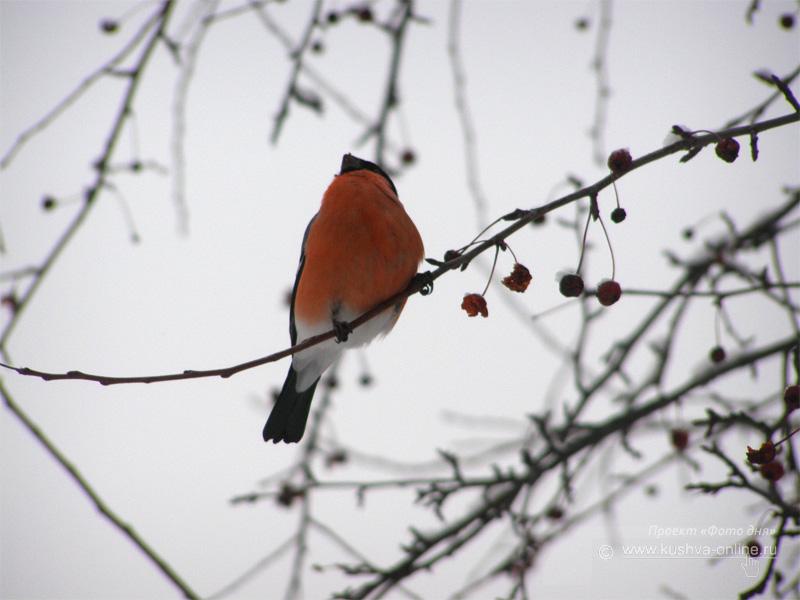 Фото дня от 16 декабря 2008 г. г. Автор: Луиза Садкова