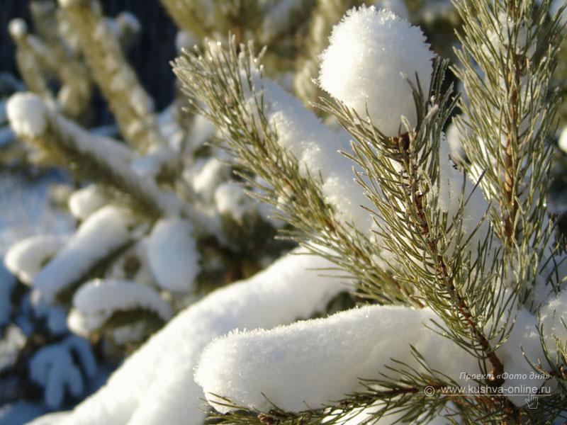 Фото дня от 18 декабря 2008 г. г. Автор: Александр Скрябин