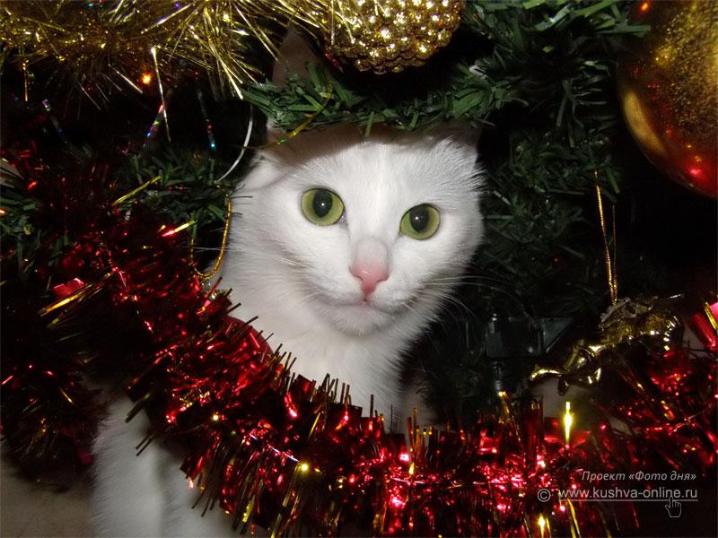 Фото дня от 30 декабря 2008 г. г. Автор: Луиза Садкова