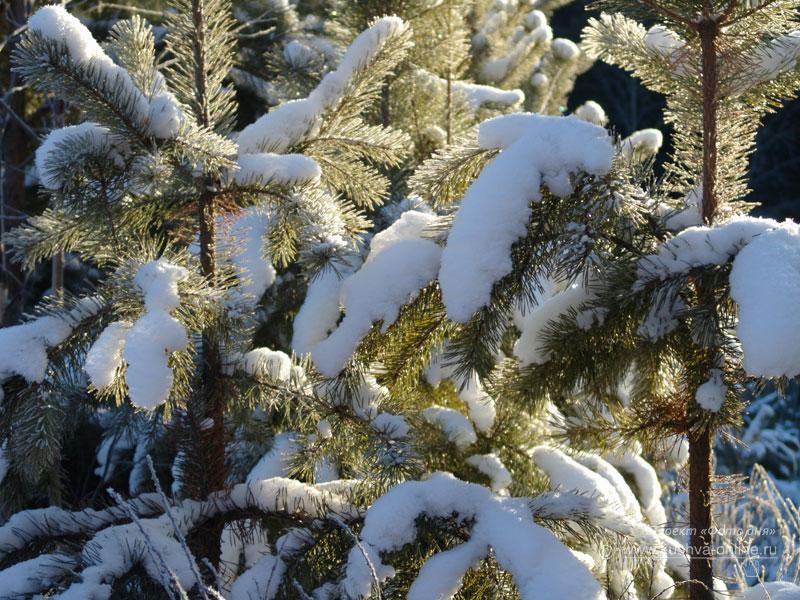 Фото дня от 15 января 2009 г. г. Автор: Анонимный фотомастер