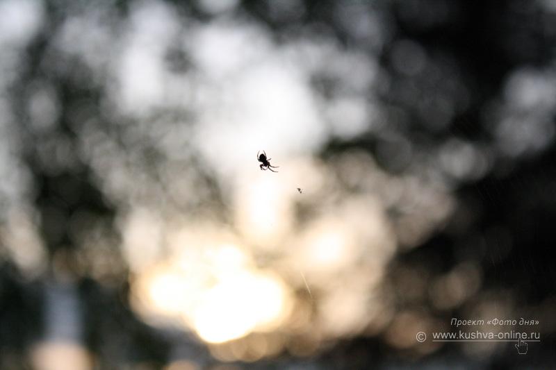 Фото дня от 24 июля 2009 г. г. Автор: Анастасия Москвина
