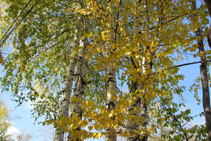 Фото дня от 19 сентября 2009 г. г. Автор: Луиза Садкова
