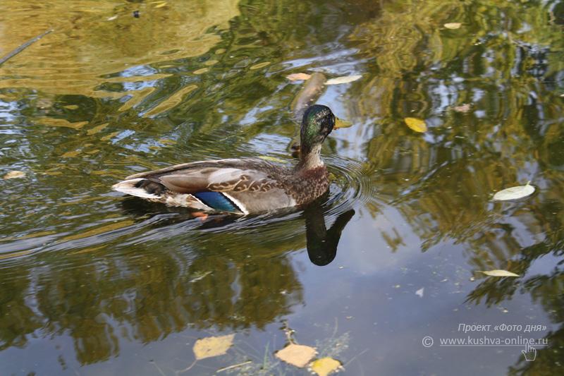 Фото дня от 19 октября 2009 г. г. Автор: Анастасия Москвина