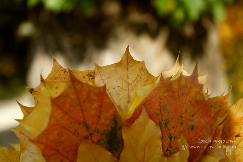 Фото дня от 20 октября 2009 г. г. Автор: Анастасия Москвина