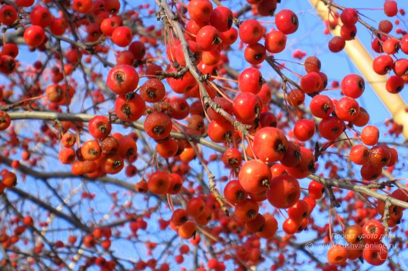 Фото дня от 25 октября 2009 г. г. Автор: Луиза Садкова