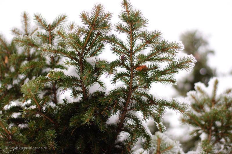 Фото дня от 14 ноября 2009 г. г. Автор: Александр Скрябин