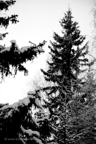 Фото дня от 29 ноября 2009 г. г. Автор: Александр Скрябин