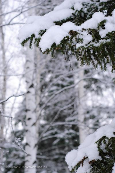 Фото дня от 12 декабря 2009 г. г. Автор: Александр Скрябин