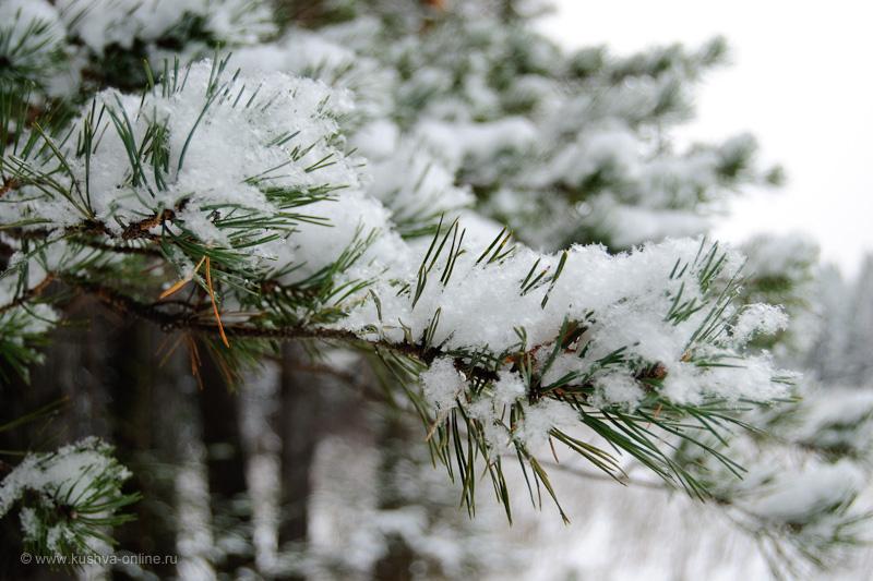 Фото дня от 16 декабря 2009 г. г. Автор: Александр Скрябин