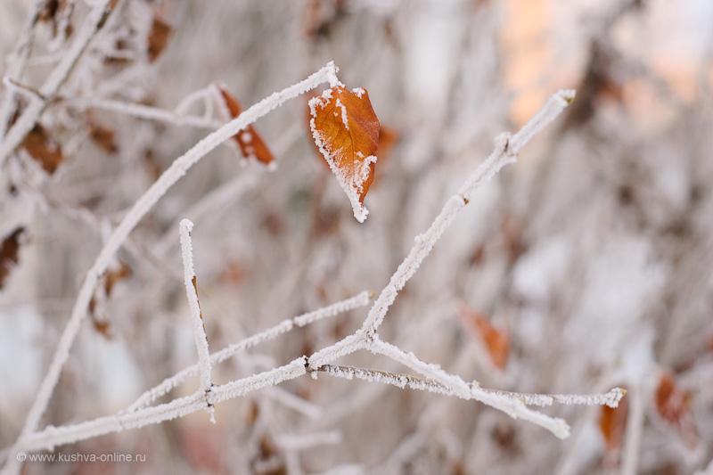 Фото дня от 19 декабря 2009 г. г. Автор: Александр Скрябин