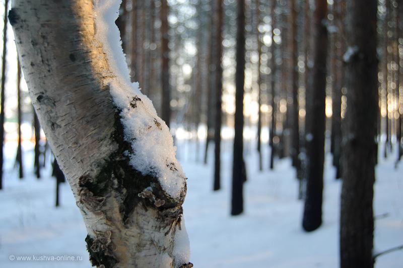 Фото дня от 2 января 2010 г. г. Автор: Александр Скрябин