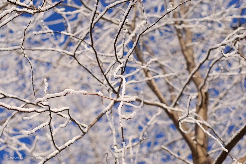 Фото дня от 23 января 2010 г. г. Автор: Александр Скрябин