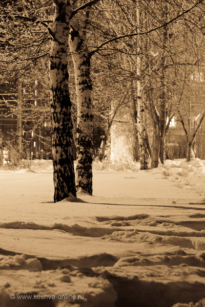 Фото дня от 26 января 2010 г. г. Автор: Александр Скрябин