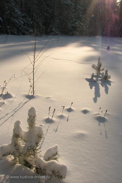 Фото дня от 1 февраля 2010 г. г. Автор: Евгений Панькин