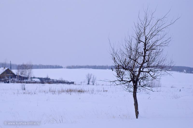Фото дня от 20 февраля 2010 г. г. Автор: Александр Скрябин