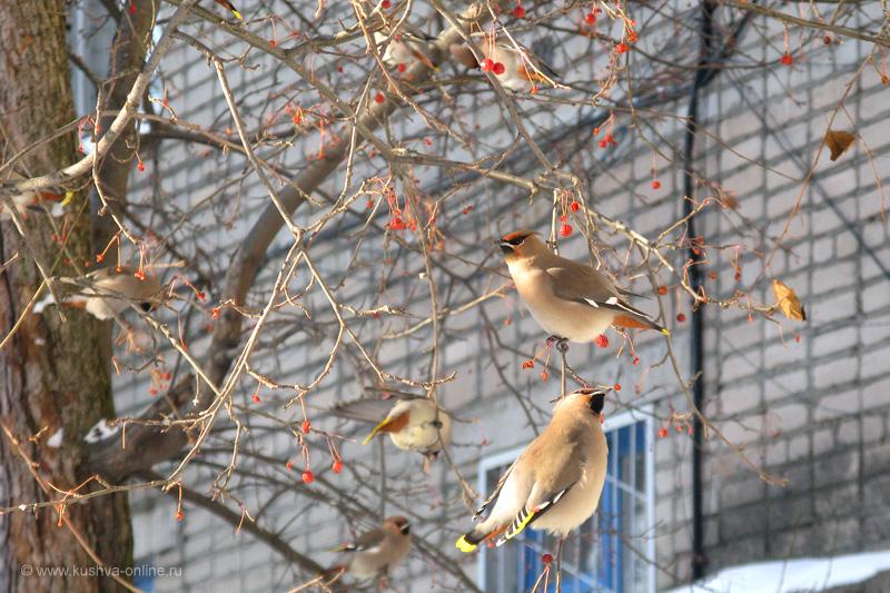 Фото дня от 27 февраля 2010 г. г. Автор: Файзутдинова Э. В.