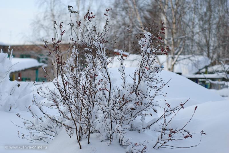 Фото дня от 4 марта 2010 г. г. Автор: Александр Скрябин