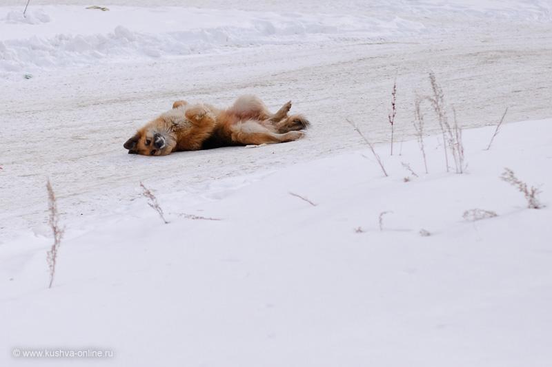 Фото дня от 7 марта 2010 г. г. Автор: Александр Скрябин