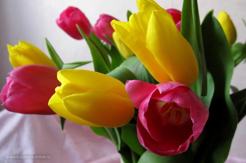 Фото дня от 8 марта 2010 г. г. Автор: Луиза Садкова