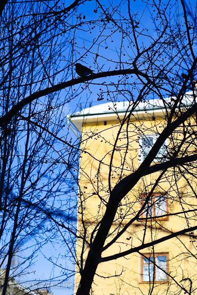 Фото дня от 21 марта 2010 г. г. Автор: Александр Скрябин