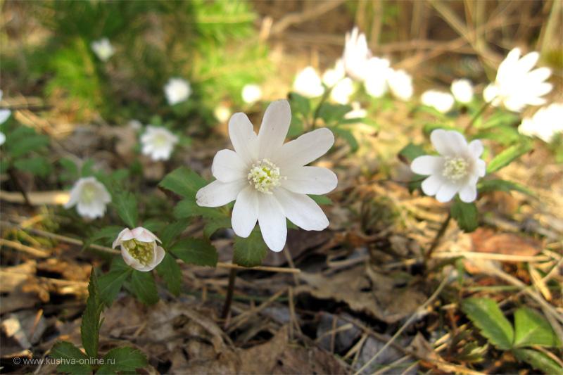 Фото дня от 26 апреля 2010 г. г. Автор: Луиза Садкова