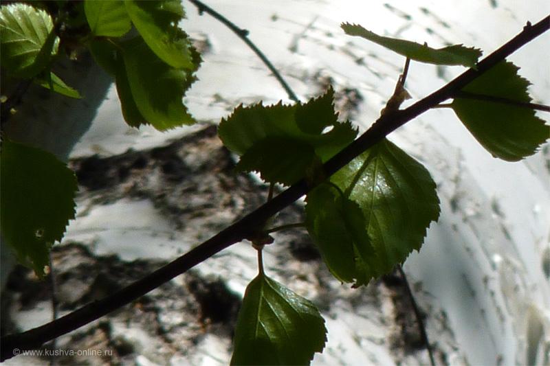Фото дня от 15 мая 2010 г. г. Автор: Ульяна Мылицына