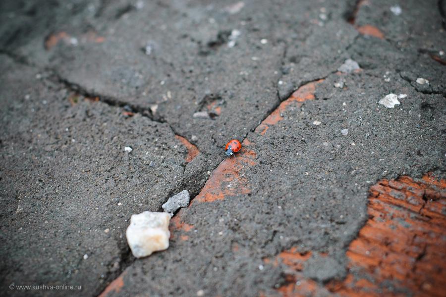 Фото дня от 15 июня 2010 г. г. Автор: Александр Скрябин