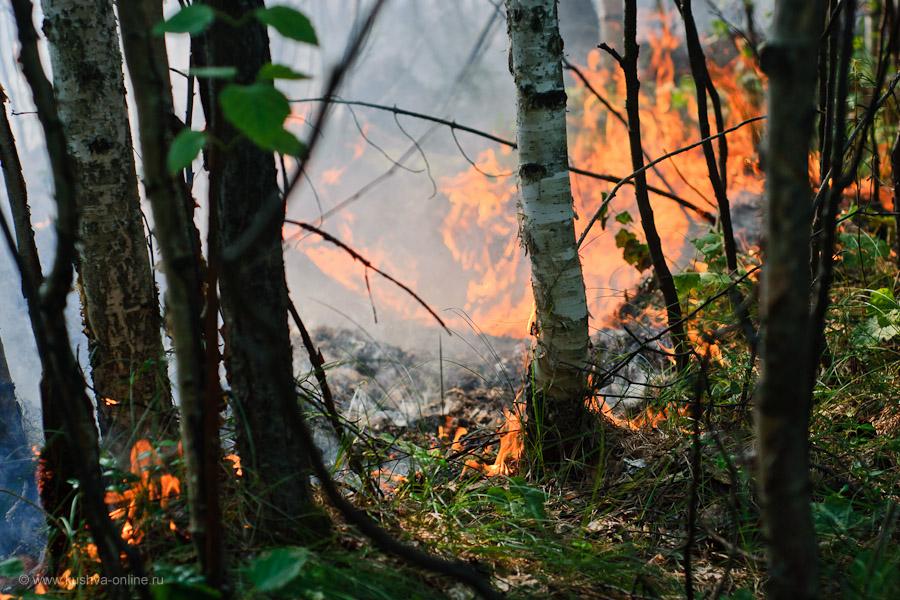 Фото дня от 4 августа 2010 г. г. Автор: Александр Скрябин