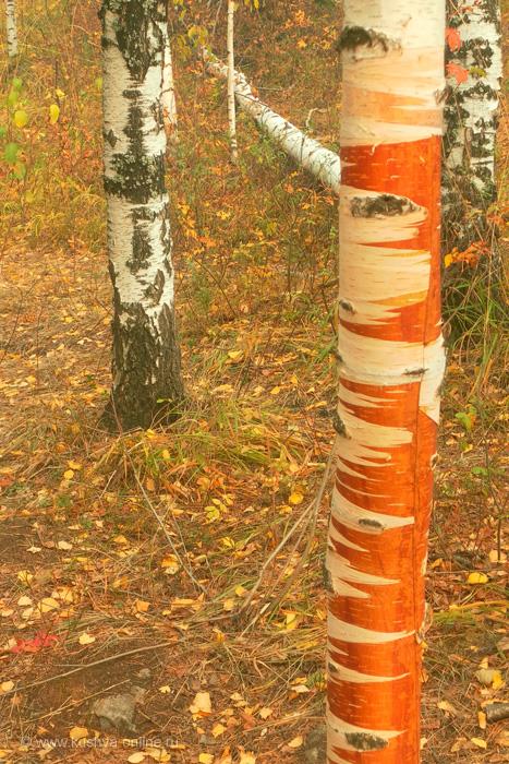 Фото дня от 29 сентября 2010 г. г. Автор: Катюшка Кузовникова