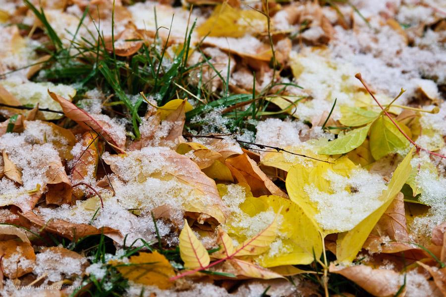 Фото дня от 1 октября 2010 г. г. Автор: Александр Скрябин