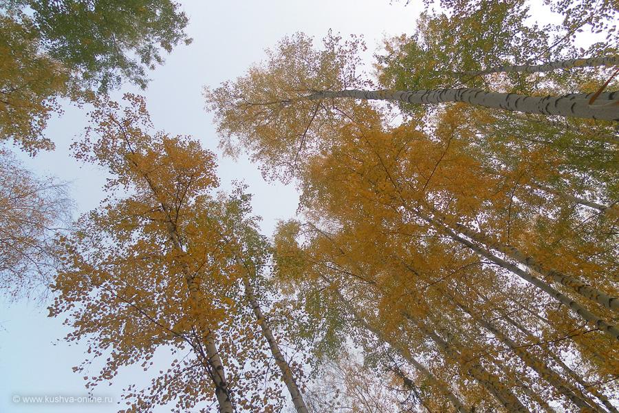 Фото дня от 6 октября 2010 г. г. Автор: Катюшка Кузовникова