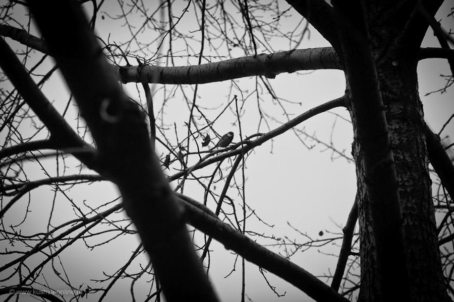 Фото дня от 30 октября 2010 г. г. Автор: Александр Скрябин