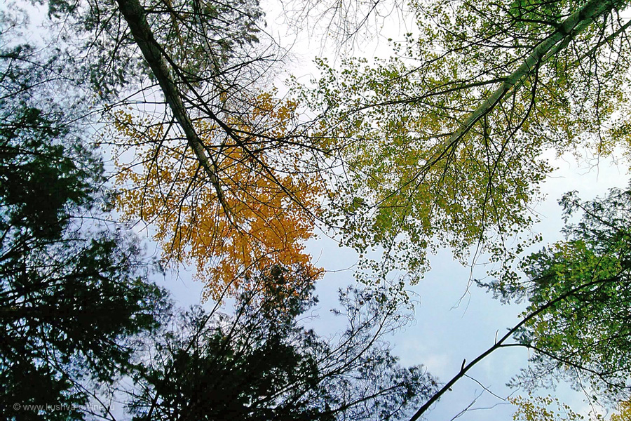 Фото дня от 6 ноября 2010 г. г. Автор: Ангелина Шаля