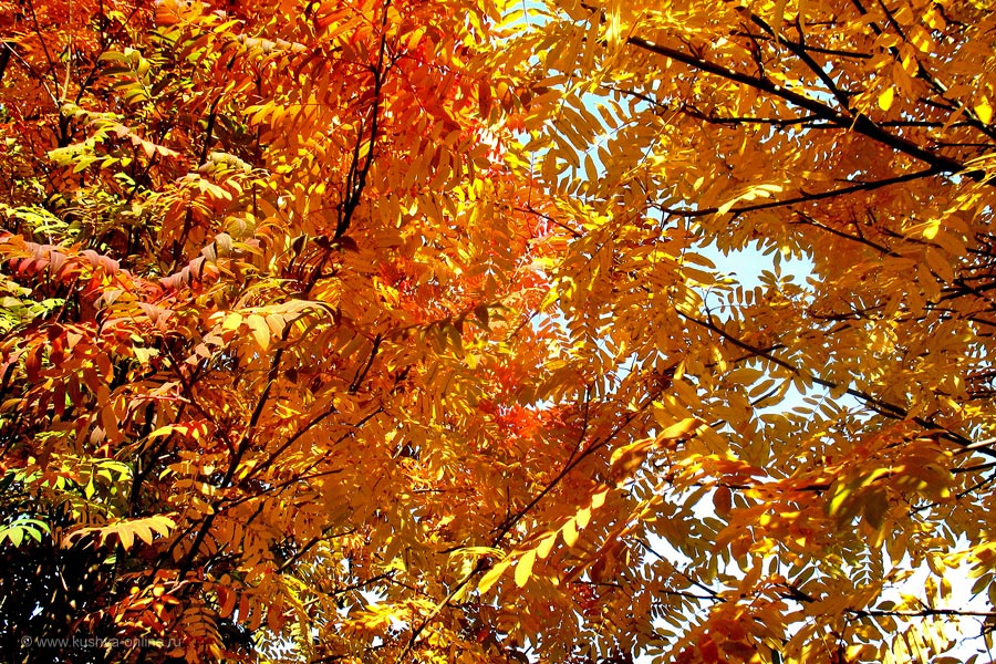 Фото дня от 9 ноября 2010 г. г. Автор: Ксюша Фирсова