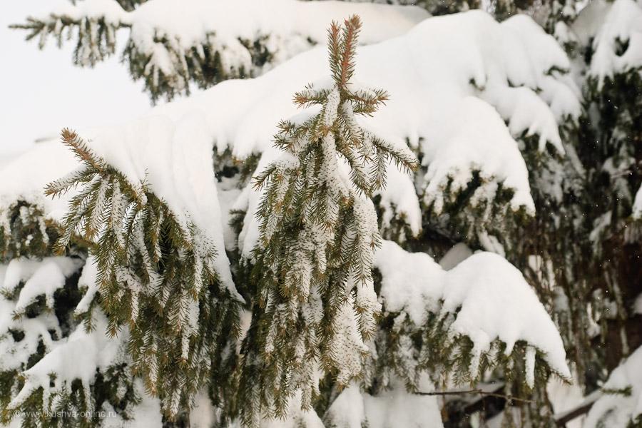 Фото дня от 4 декабря 2010 г. г. Автор: Александр Скрябин