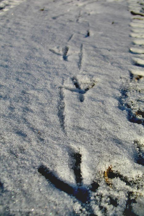 Фото дня от 7 декабря 2010 г. г. Автор: Ксюша Фирсова