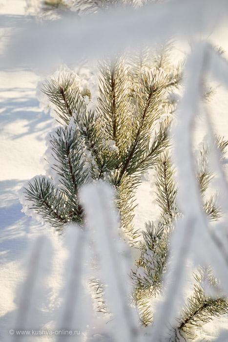 Фото дня от 17 декабря 2010 г. г. Автор: Александр Скрябин