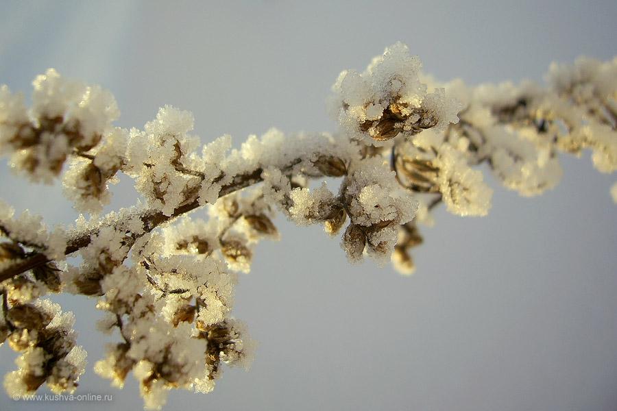 Фото дня от 22 декабря 2010 г. г. Автор: Елена Строганова