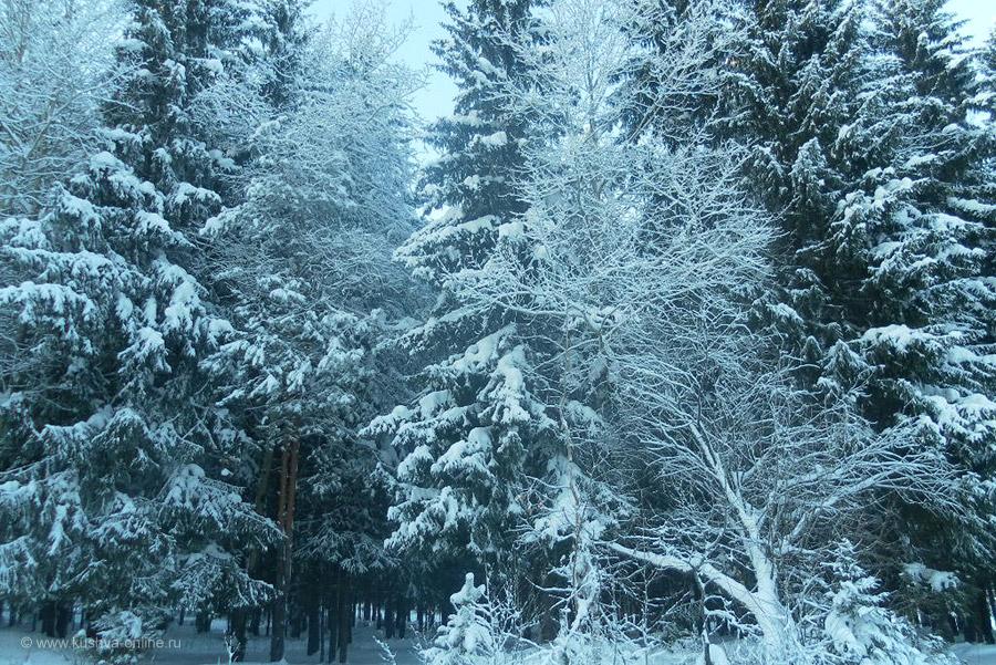 Фото дня от 23 декабря 2010 г. г. Автор: Катюшка Кузовникова