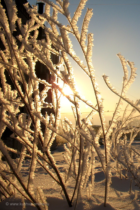 Фото дня от 25 декабря 2010 г. г. Автор: Ксюша Фирсова