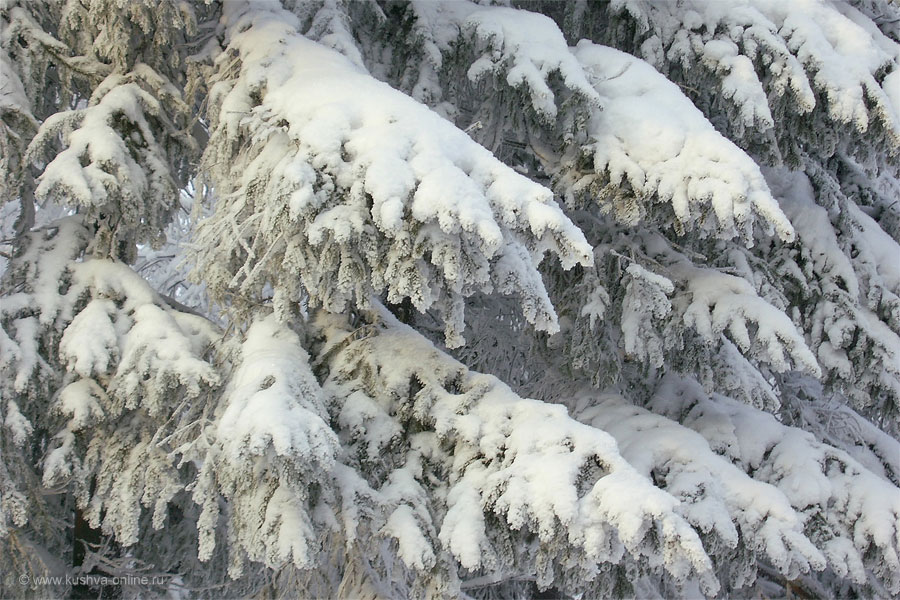 Фото дня от 8 января 2011 г. г. Автор: Елена Строганова