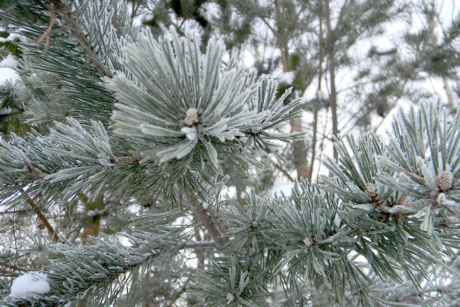 Фото дня от 11 января 2011 г. г. Автор: Айрат Хисматулин